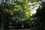 新宿御苑(緑)_121110