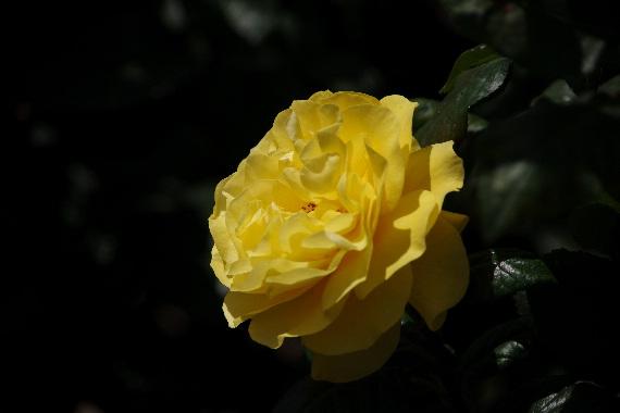 駕与丁公園のバラ~1 4