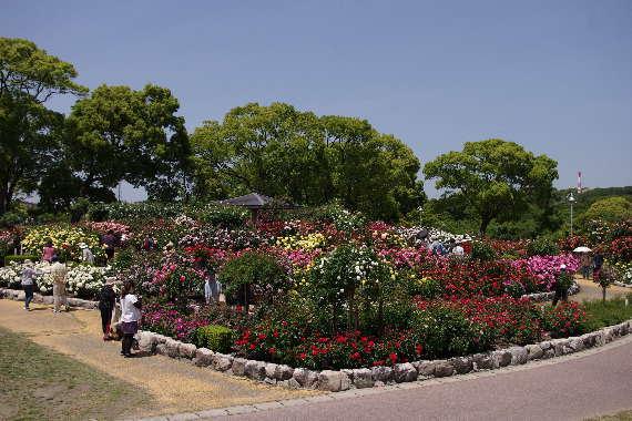 駕与丁公園のバラ~1 2