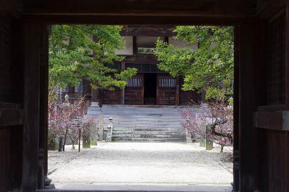 殿とデート・高伝寺の梅 4
