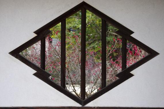 殿とデート・高伝寺の梅 3