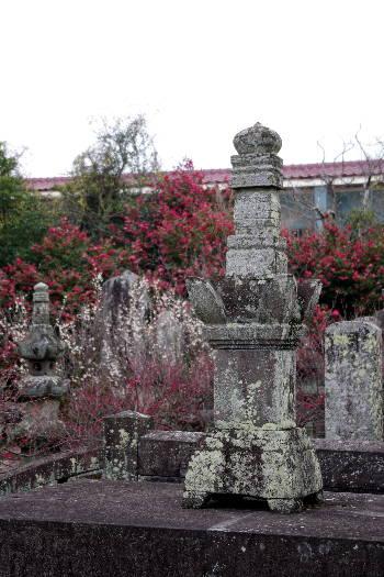 殿と墓マイラー・高伝寺の梅 4