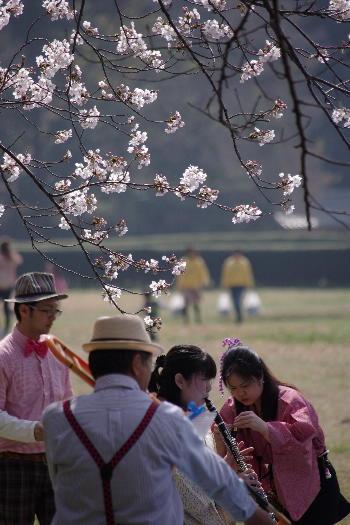 太宰府政庁跡の桜 7