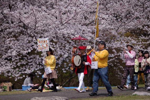 太宰府政庁跡の桜 9