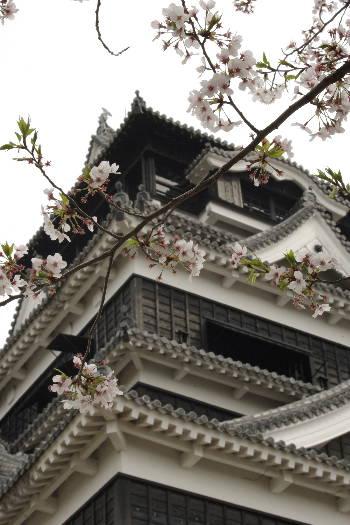 激LOVE!熊本城の桜1 7