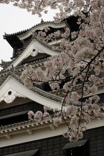 激LOVE!熊本城の桜1 9