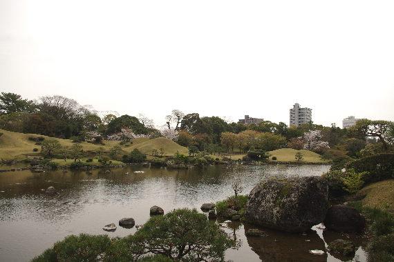 水前寺成趣園の桜3