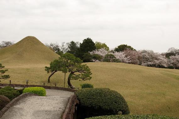 水前寺成趣園の桜5
