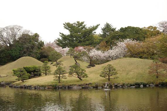 水前寺成趣園の桜10