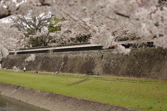 激LOVE!熊本城の桜2 8