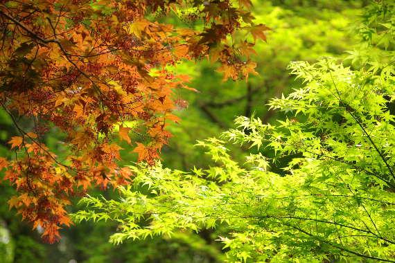 十可苑の春~新緑 1
