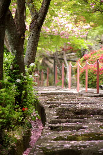 十可苑の春~八重桜7