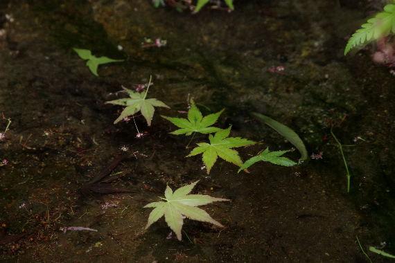 十可苑の春~新緑 8