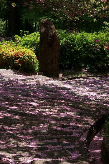 十可苑の春~八重桜6