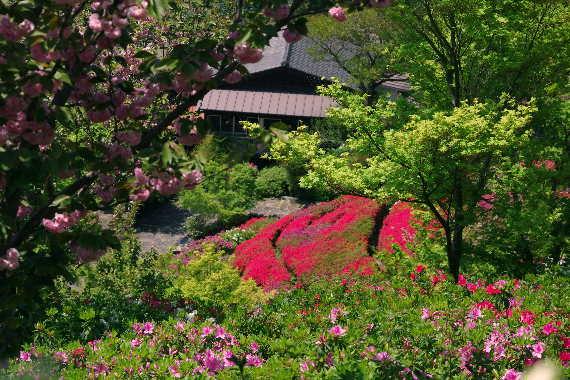 十可苑の春~つつじ 10