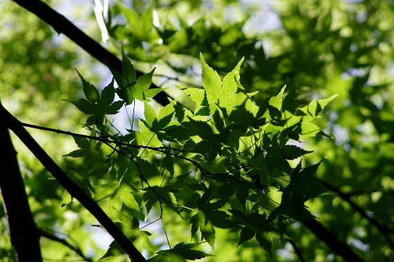 十可苑の春~新緑 7