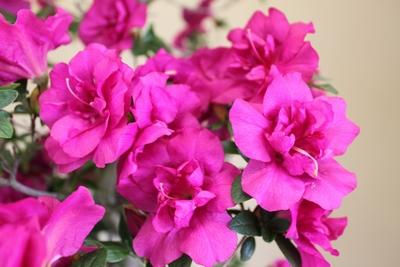 紫慕情008_2