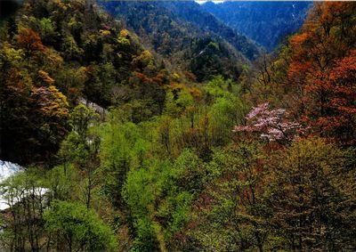 宇毛 俊勝「山里の春」
