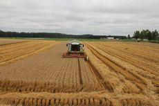 モデルコース 小麦
