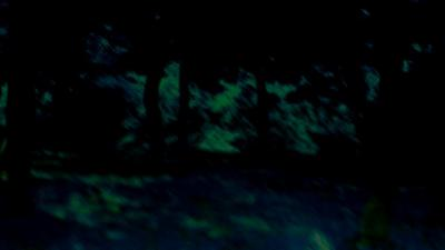 N-Forest.jpg