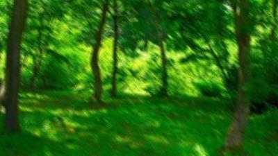 N-forest-0.jpg