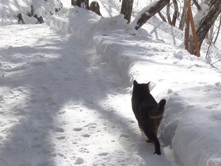 雪が冷たいから7