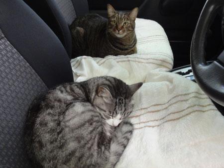 車でお昼寝、だ~い好き3
