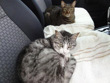 車でお昼寝、だ~い好き5