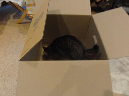 大きなダンボール箱1