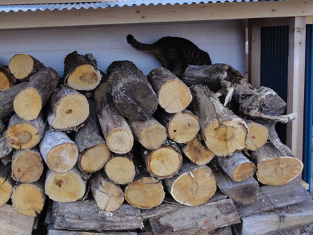 こっちの薪置き場も1