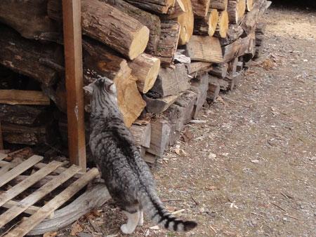 こっちの薪置き場も4