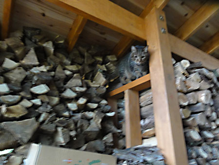 薪小屋のマロン1