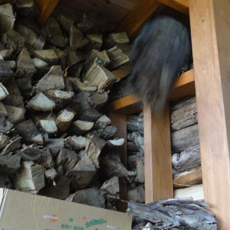 薪小屋のマロン2