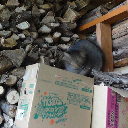 薪小屋のマロン3