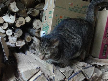 薪小屋のマロン4