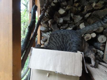 薪小屋のマロン5