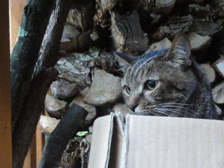 薪小屋のマロン6