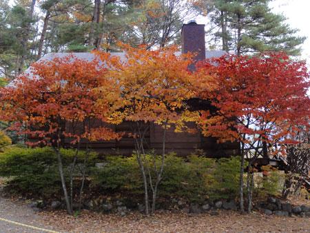 紅葉のお家1