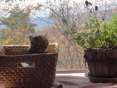 窓辺のナナとマロン1