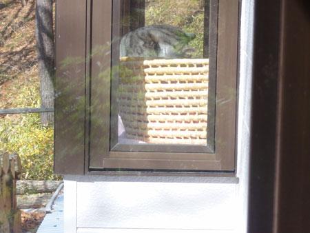 窓辺のナナとマロン3