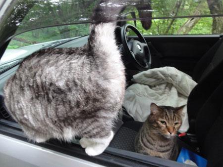 車で寝るの?4