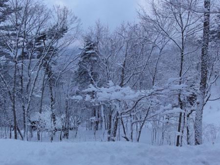 起きたら 大雪!1