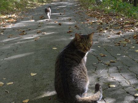 午後のお散歩3