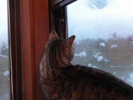 起きたら 大雪!4