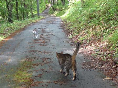 久しぶりのお散歩5