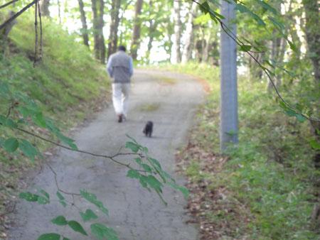 ルパンちゃんのお散歩5