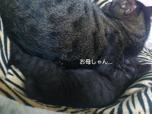 fc2blog_201206040143015cd.jpg