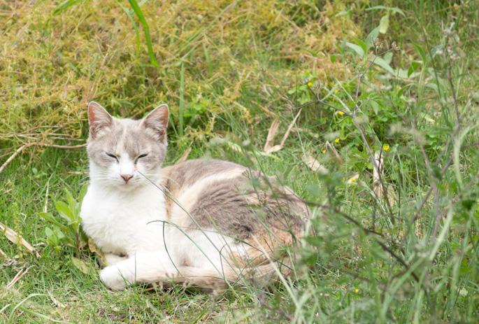 cat_takarazuka15.jpg
