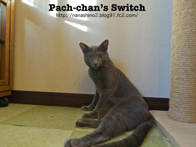 pacchy257.jpg