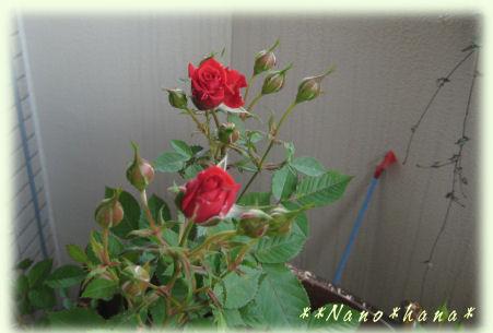 IMG_7095.jpg